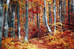 fall, forest, colorful-3089995.jpg